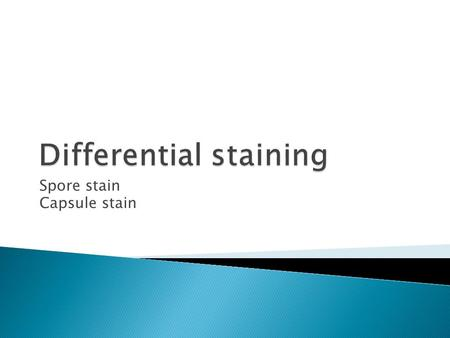 Spore stain Capsule stain. Endospores  are formed by some bacteria, aerobic Bacillus species and anaerobic Clostridium species.  Non active, resistant.
