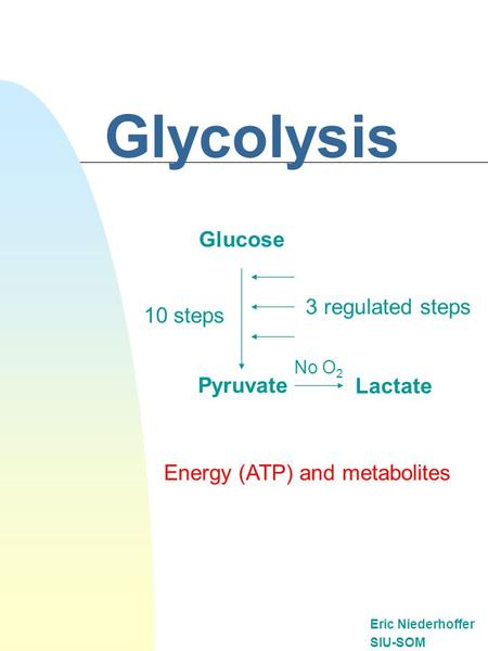 Glycolysis Eric Niederhoffer SIU-SOM Glucose Pyruvate Lactate 10 steps No O 2 Energy (ATP) and metabolites 3 regulated steps.