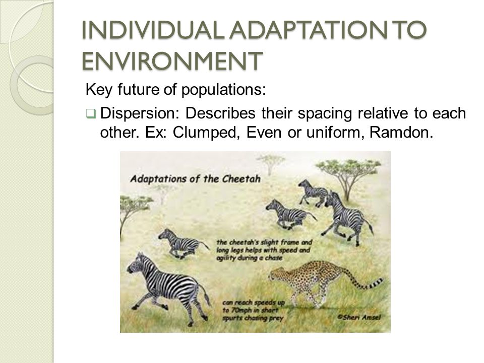 INDIVIDUAL ADAPTATION TO ENVIRONMENT  Limiting factor: Any biotic or abiotic factor that restricts the existance of organisms in a specific environment.
