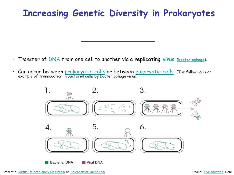 Increasing Genetic Diversity in Prokaryotes ________________ Image: Bacterial conjugation by AdenosineBacterial conjugation From the Virtual Microbiology Classroom on ScienceProfOnline.comVirtual Microbiology ClassroomScienceProfOnline.com