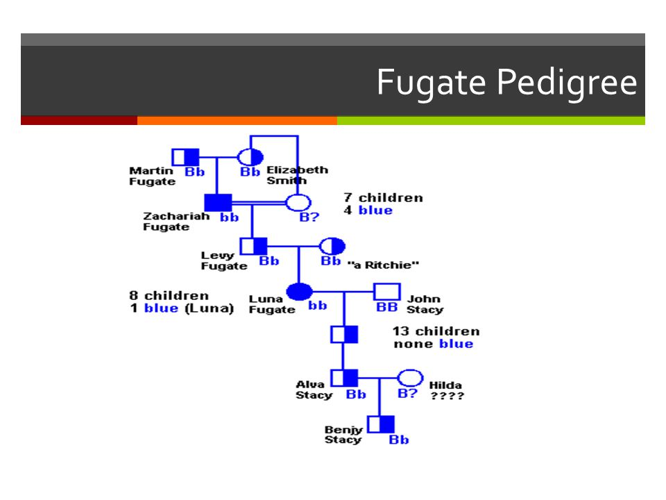 Fugate Pedigree