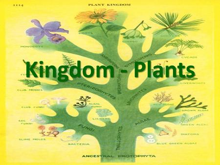 Kingdom - Plants. What are the characteristics of all members of the Plant Kingdom? Eukaryotic Autotrophic Can go through Photosynthesis Multicellular.