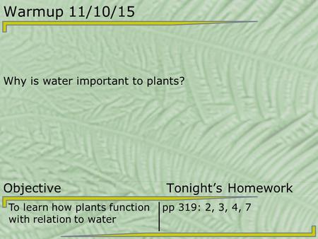 Warmup 11/10/15 Why is water important to plants? Objective Tonight's Homework To learn how plants function with relation to water pp 319: 2, 3, 4, 7.