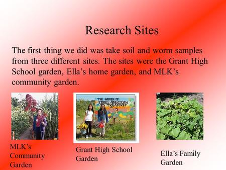 The first thing we did was take soil and worm samples from three different sites. The sites were the Grant High School garden, Ella's home garden, and.
