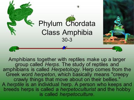 Phylum Chordata Class Amphibia 30-3 Amphibians together with reptiles make up a larger group called Herps. The study of reptiles and amphibians is called.