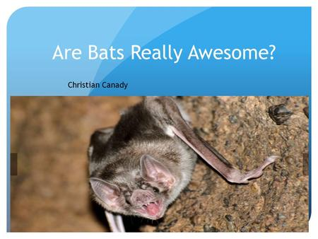 Are Bats Really Awesome? Christian Canady Interactions with other plants and animals ? They interact with other bats, moths, but it dose not interact.