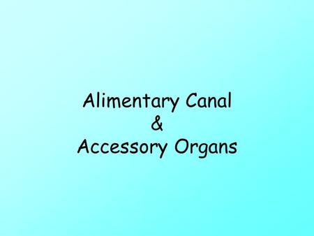 Alimentary Canal & Accessory Organs. Warm up Apr. 7 What are two parts of the digestive system? Describe mechanical digestion. How much can the stomach.