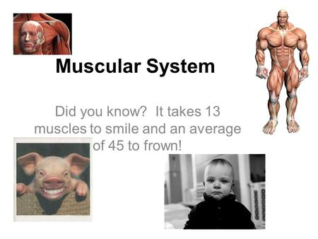 Muscular System Did you know? It takes 13 muscles to smile and an average of 45 to frown!