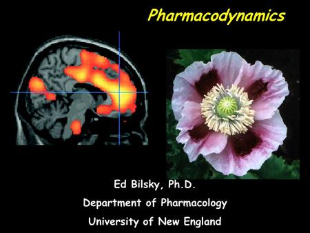 Pharmacodynamics Ed Bilsky, Ph.D. Department of Pharmacology University of New England.