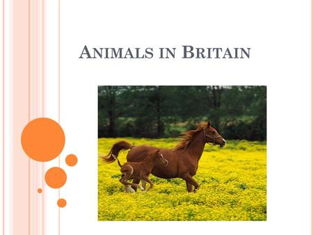 A NIMALS IN B RITAIN. P OPULAR P ETS Most people in Britain like animals. A lot of families have got a pet. Dogs, cats, hamsters, rabbits are all popular.