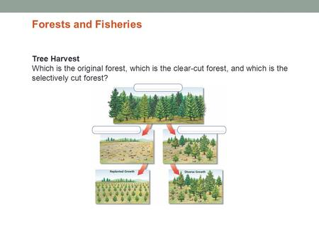 Tree Harvest Which is the original forest, which is the clear-cut forest, and which is the selectively cut forest? Forests and Fisheries.