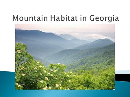 Mountain Habitat in Georgia