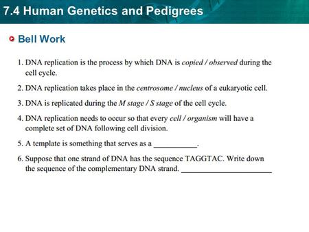 7.4 Human Genetics and Pedigrees Bell Work. 7.4 Human Genetics and Pedigrees Bell Work.
