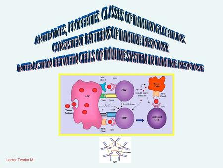 Lector Tvorko M. S.. ANTIBODIES (IMMUNOGLOBULINS) Antibodies are globulin proteins (immunoglobulins) that react specifically with the antigen that stim­ulated.