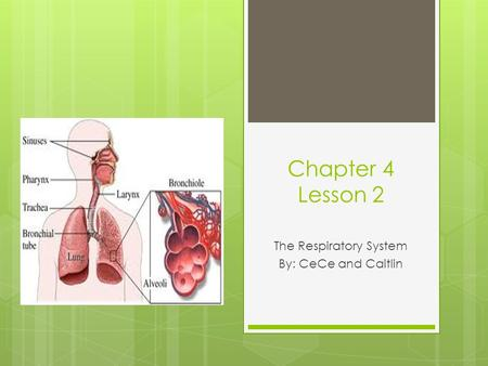 Chapter 4 Lesson 2 The Respiratory System By: CeCe and Caitlin.