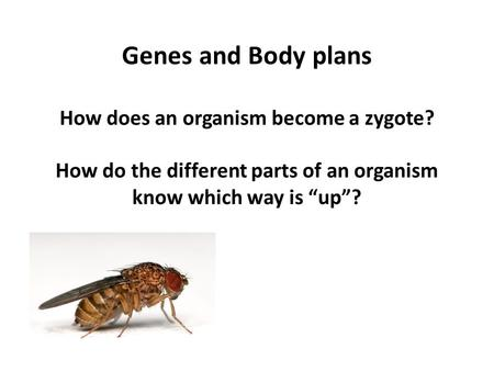 "Genes and Body plans How does an organism become a zygote? How do the different parts of an organism know which way is ""up""?"