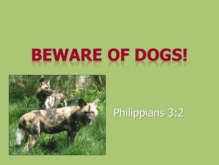 Philippians 3:2. Dogs Unclean, diseased scavengersUnclean, diseased scavengers Conveyed contempt and scorn among Jews for Gentiles (Mk 7:25-28)Conveyed.