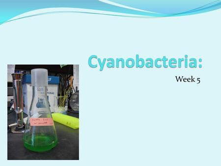 Week 5. 1.Create KaiA and KaiBC biobricks. 2.Transform E. coli with Kai Biobricks to reconstitute KaiC phosphorylation cycle with no reporter attached.