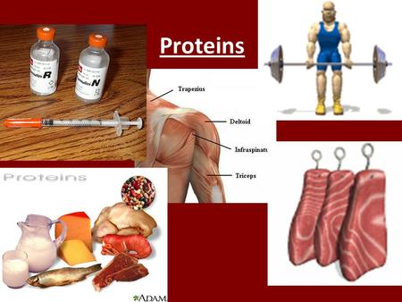 Proteins. Functions of Proteins Some Functions of Proteins Type of proteinExampleFunction Enzymes amylasePromotes the break down of starch to the simple.