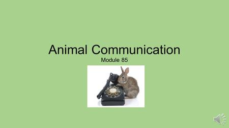 Animal Communication Module 85