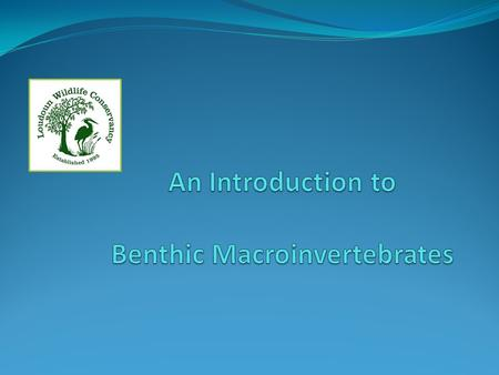 An Introduction to Benthic Macroinvertebrates