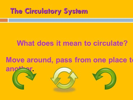 The Circulatory System What does it mean to circulate? Move around, pass from one place to another.