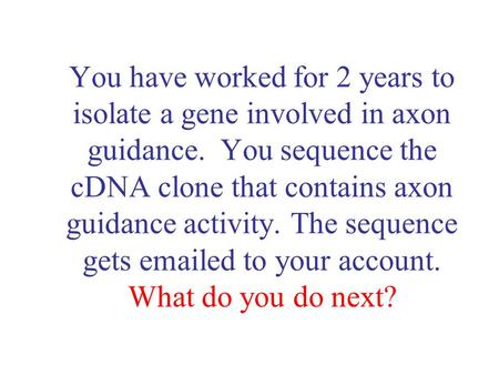 You have worked for 2 years to isolate a gene involved in axon guidance. You sequence the cDNA clone that contains axon guidance activity. The sequence.