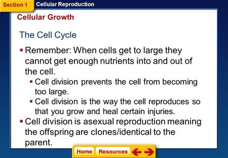 The Cell Cycle  Remember: When cells get to large they cannot get enough nutrients into and out of the cell.  Cell division prevents the cell from becoming.