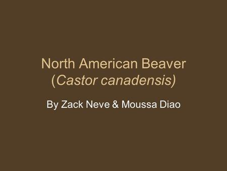 North American Beaver (Castor canadensis) By Zack Neve & Moussa Diao.