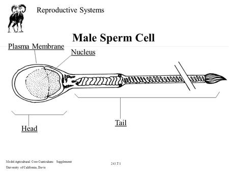 WAnt more cell membrane from a sperm cell