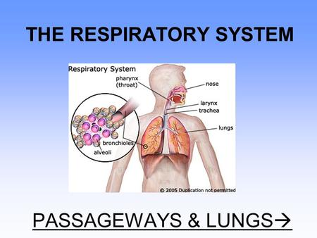 THE RESPIRATORY SYSTEM PASSAGEWAYS & LUNGS . FUNCTIONS FUNCTIONS of the respiratory system: –#1 = obtaining oxygen & removing carbon dioxide = gas exchange.