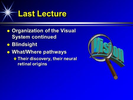 Last Lecture Organization of the Visual System continued Organization of the Visual System continued Blindsight Blindsight What/Where pathways What/Where.