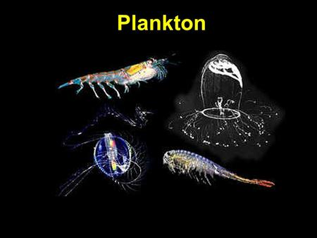 Plankton. Marine life 3 categories: 1.Benthos: bottom dwellers; sponges, crabs 2.Nekton: strong swimmers- whales, fish, squid 3.Plankton: animal/plants.