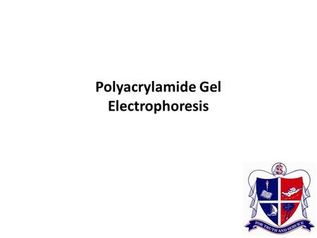 Polyacrylamide Gel Electrophoresis. Electrophoresis Horizontal Agarose Gels Agarose forms a gel or molecular sieve that supports the movement of small.