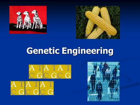 Genetic Engineering - History and Future