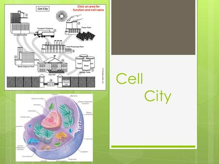 Cell City. Introduction  This Webquest is designed to aid students in learning the basic parts of the cell. The student will be required to research.