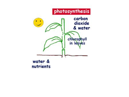 Photosynthesis What do you know about photosynthesis? –What is it?? –Who does it? –Where does it happen? –How does it happen?
