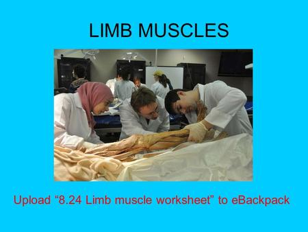 "LIMB MUSCLES Upload ""8.24 Limb muscle worksheet"" to eBackpack."