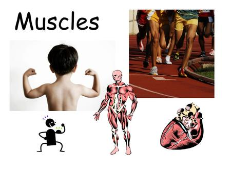 Muscles. MUSCLES Muscle – Organ that contracts and relaxes (returns to regular length). As a result, body parts move. Tendon – thick bands that attach.