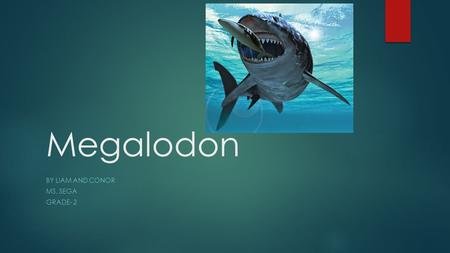 Megalodon BY LIAM AND CONOR MS. SEGA GRADE- 2 What did the Megalodon look like?  50 feet long  Prehistoric shark  Teeth as sharp as knives.