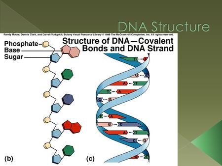  DNA stands for DEOXYRIBONUCLEIC ACID  DNA holds genetic information in cells  DNA is a nucleic acid polymer. › The monomer of a nucleic acid is a.