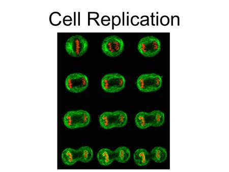 Cell Replication. Binary Fission is how prokaryotic cells (bacteria) copy themselves. The DNA copies and separates, and the cell wall splits the cell.
