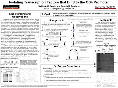 Isolating Transcription Factors that Bind to the CD4 Promoter Matthew C. Surdel and Sophia D. Sarafova Davidson College Biology Department I. Background.