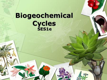Biogeochemical Cycles SES1e. Recycling in the Biosphere VOCABULARY  Biogeochemical Cycles – Process in which elements, chemical compounds, and other.