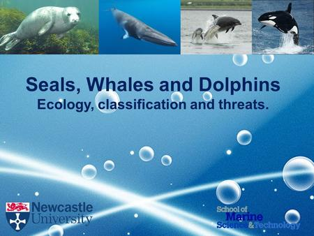 Seals, Whales and Dolphins Ecology, classification and threats.