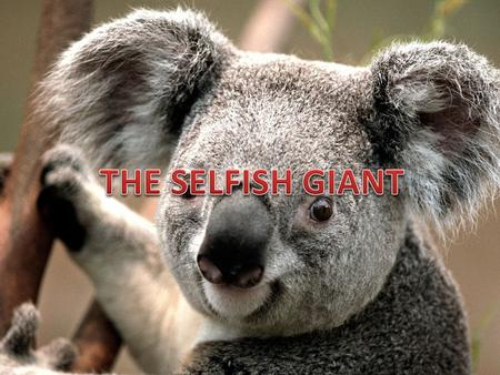 Comprehension Check-- I 1.Why is the Giant called selfish ? The Giant is called selfish because he did not allow the children to play in his beautiful.