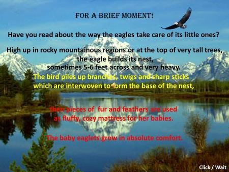 For a brief moment! Have you read about the way the eagles take care of its little ones? High up in rocky mountainous regions or at the top of very tall.