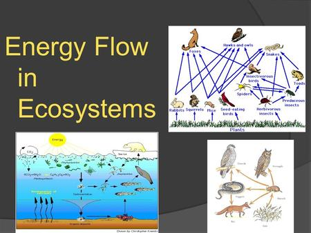 Energy Flow in Ecosystems. Movement of Energy through Ecosystems  Everything that organisms do in an ecosystem; running, breathing, burrowing, growing,