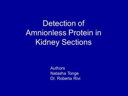 Detection of Amnionless Protein in Kidney Sections