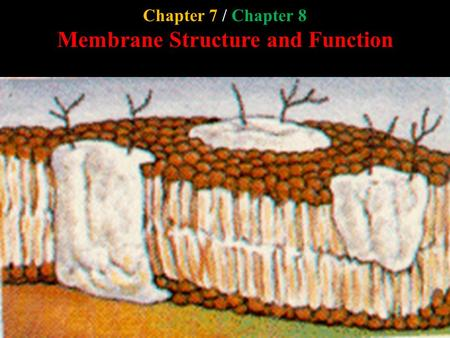 Chapter 7 / Chapter 8 Membrane Structure and Function.